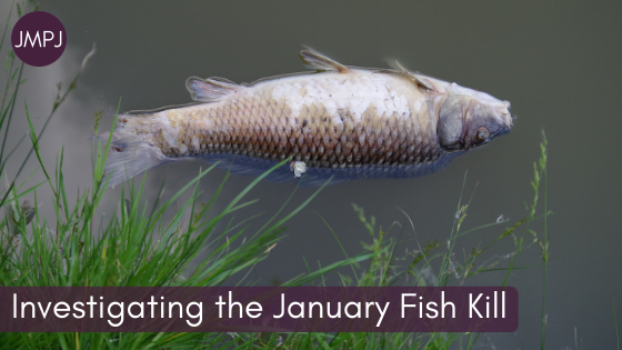 Featured Content – Investigating the January Fish Kill